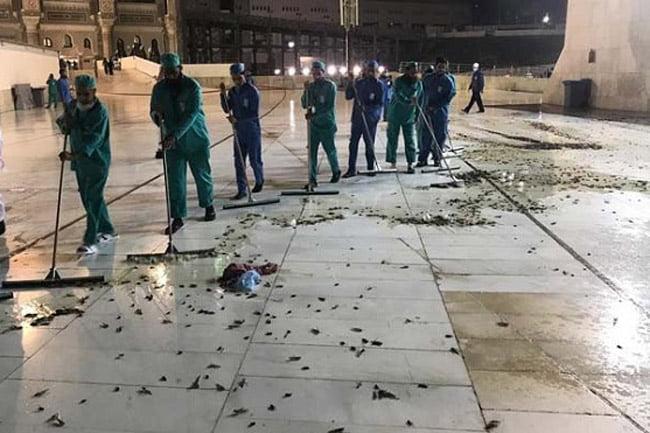 Video Masjidil Haram Dikepung Jutaan Jangkrik dan Belalang Hitam