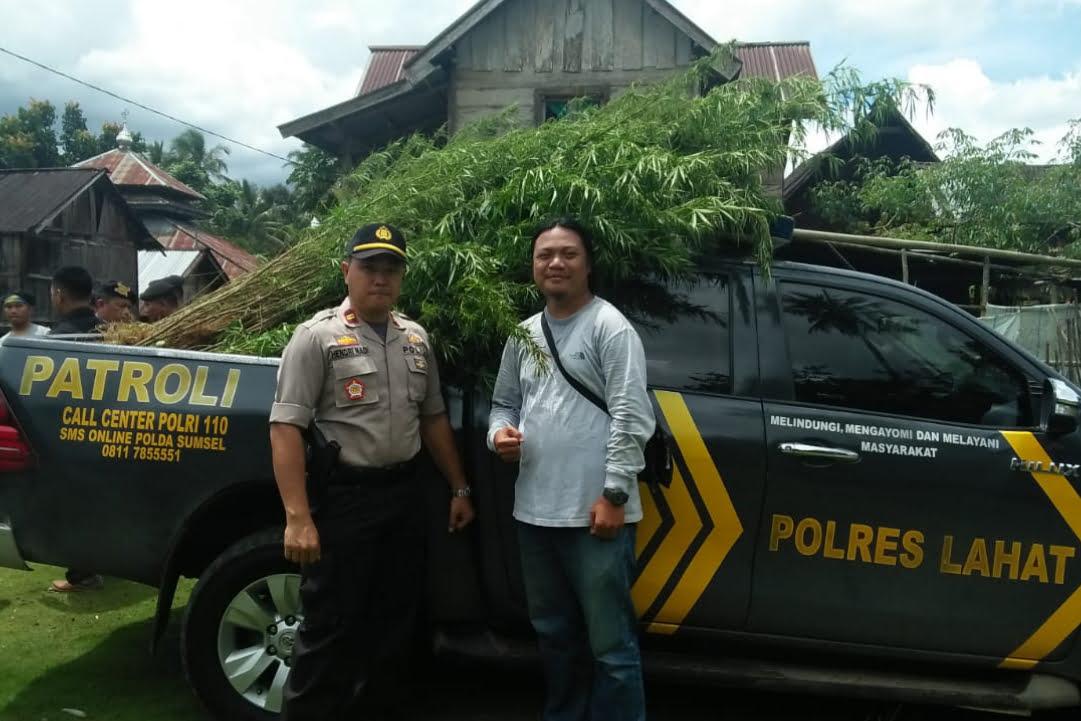 Satres Narkoba Polres Lahat TemukanLadang Ganja 1 Hektar