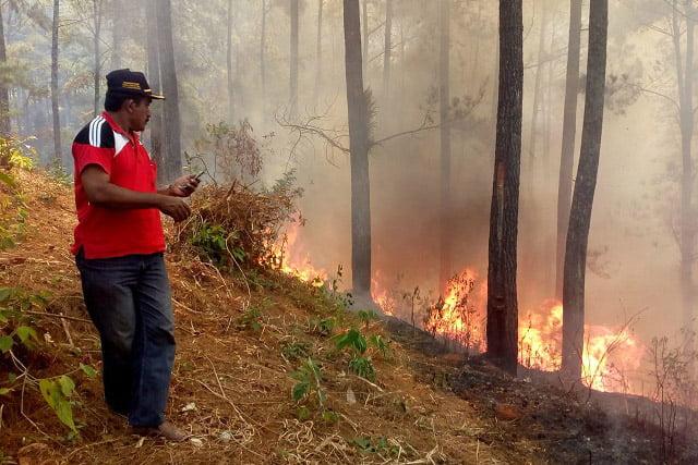 Hutan Pinus di Gunung Geulis Bantarkawung Terbakar