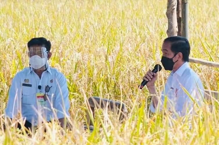 Presiden Jokowi Tinjau Panen Padi dan Berdialog dengan Petani di Indramayu